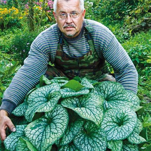 Alexander's Great Siberian Bugloss