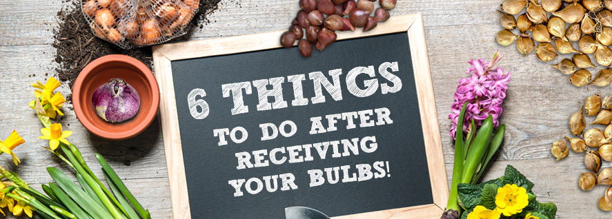 Things to do after receiving bulbs
