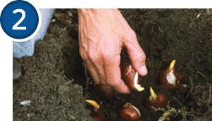 Plant your bulbs