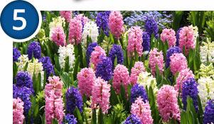 Bulbs Blooming