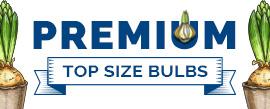 Premium Top Size Bulbs