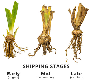 Shipping Stage