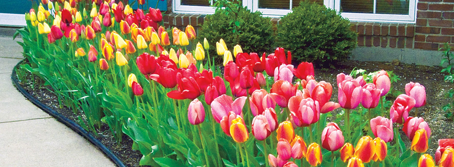Lanscaping with bulbs: colour