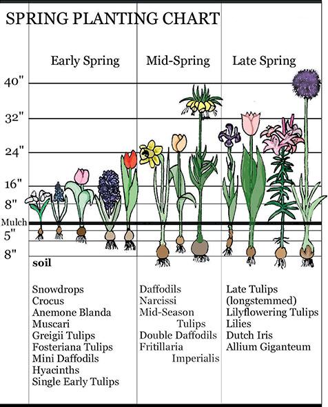Spring Planting Chart