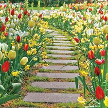 Mulicoloured Flowers in Garden