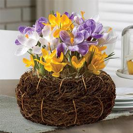 Crocus Bulb Basket