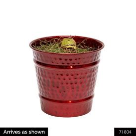 Jumbo Single Amaryllis in Red Pot