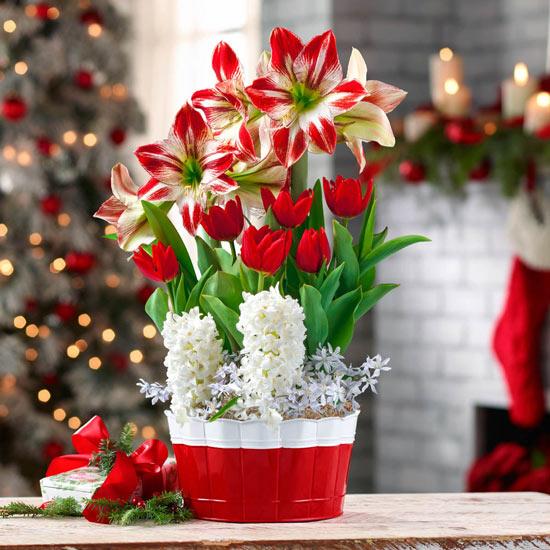 Happy Holidays Bulb Garden