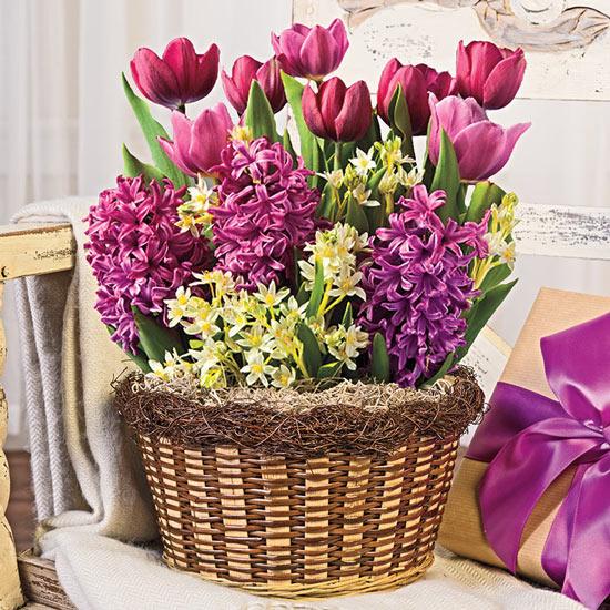 Lavender Beauty Fragrant Bulb Garden