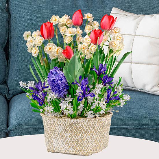 Spring Parade Bulb Garden