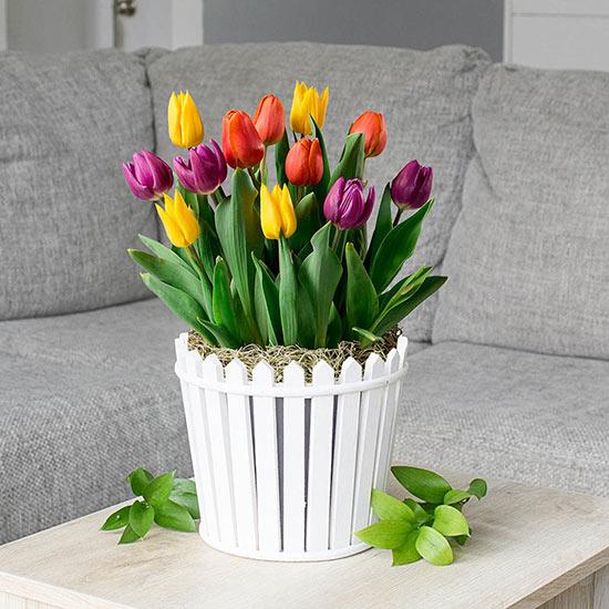 Friendly Neighbor Tulip Bulb Garden