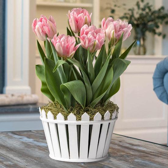 Dancing Double Tulip Garden
