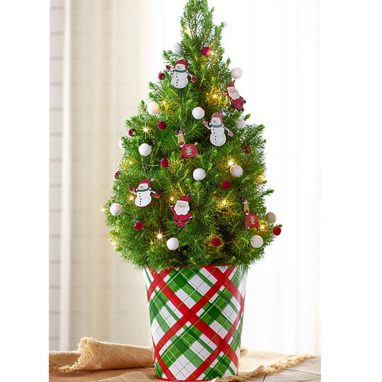 Holiday Legends Potted Spruce Tree