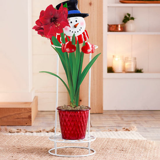 Snowman Plant Stand for Amaryllis