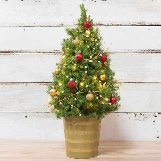 Classic Red and Gold Spruce Tree