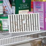 Cupboard Moth Trap<sup>™</sup> - Cupboard Moth Traps™