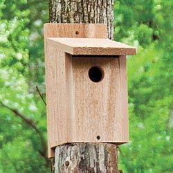 Bluebird Nestbox