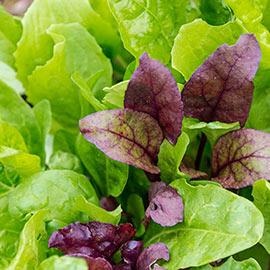 Superfood Salad Mix