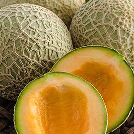 Sugar Cube Hybrid Melon