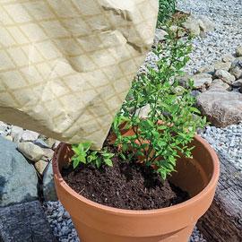 Blueberry Surefire Growth Soil Acidifier