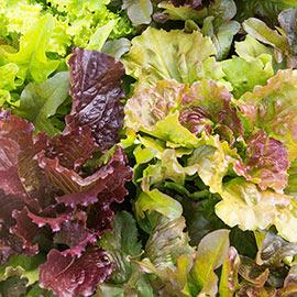 Heirloom Cutting Mixture Leaf Lettuce