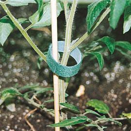 Quick-Ties Velcro Plant Tape