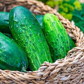 County Fair Improved Hybrid Pickling Cucumber