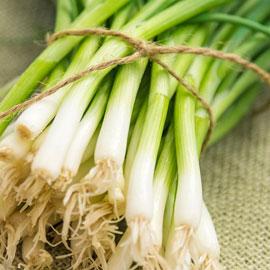 Evergreen White Bunching Onion