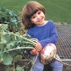 Turnip Purple Top White Globe Pkt