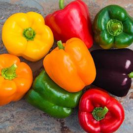 Sweet Bell Hybrid Sweet Pepper Mix - Packet of 35 Seeds