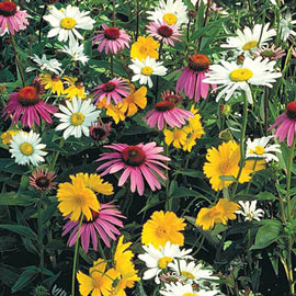 Wildflower Shade Mix