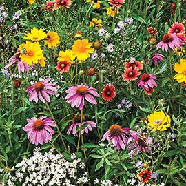 Bee-Friendly Flower Mix