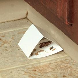 Sure-Catch™ Cockroach Trap