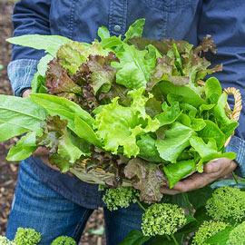 Gurney's® Premium Lettuce Blend
