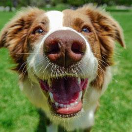 Bio-Essentials™ Flea and Tick Shampoo for Dogs