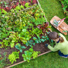 Garden Army Multi-Purpose Nematodes