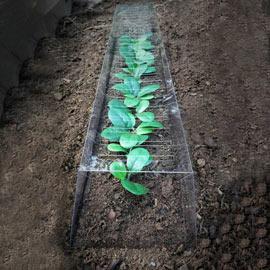 GrowAway™ Garden Plant Row Cover