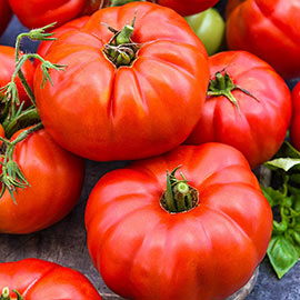 Beefsteak Tomato