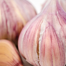Hardneck Deerfield Purple Garlic