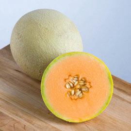 Sarah's Choice Hybrid Melon