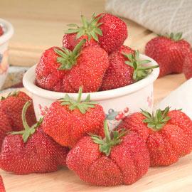 Jewel Strawberry
