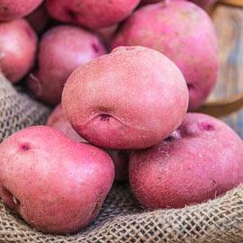 Red Pontiac Potatoes