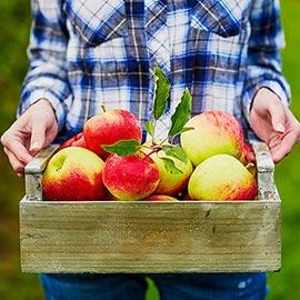 Fruit Trees Alive!<sup>®</sup> Fruit Tree Fertilizer Spikes Build-Up