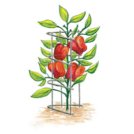 Pepper & Eggplant Support