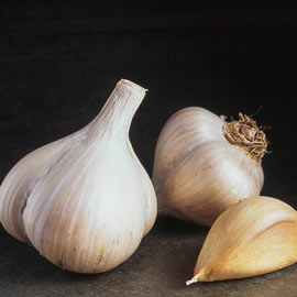 Walla Walla Early Softneck Garlic