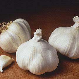 Softneck California White Garlic