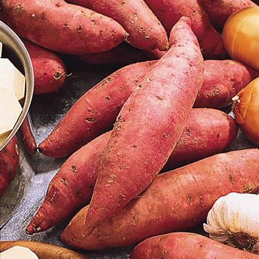 Bush Porto Rico Sweet Potato