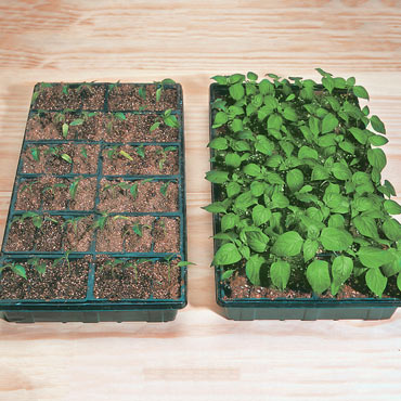 Natural Beginnings<sup>™</sup> Seed Starting Mix
