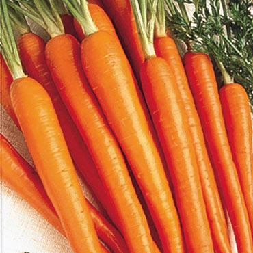 Tendersweet Carrot
