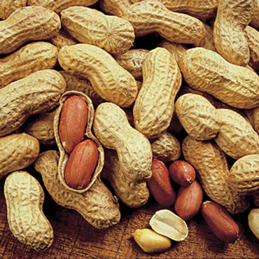Champs Peanut Seed